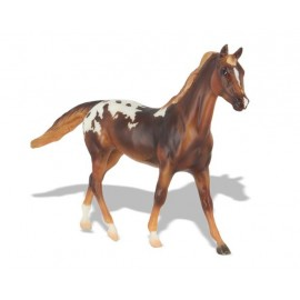 Cheval Appaloosa Chestnut